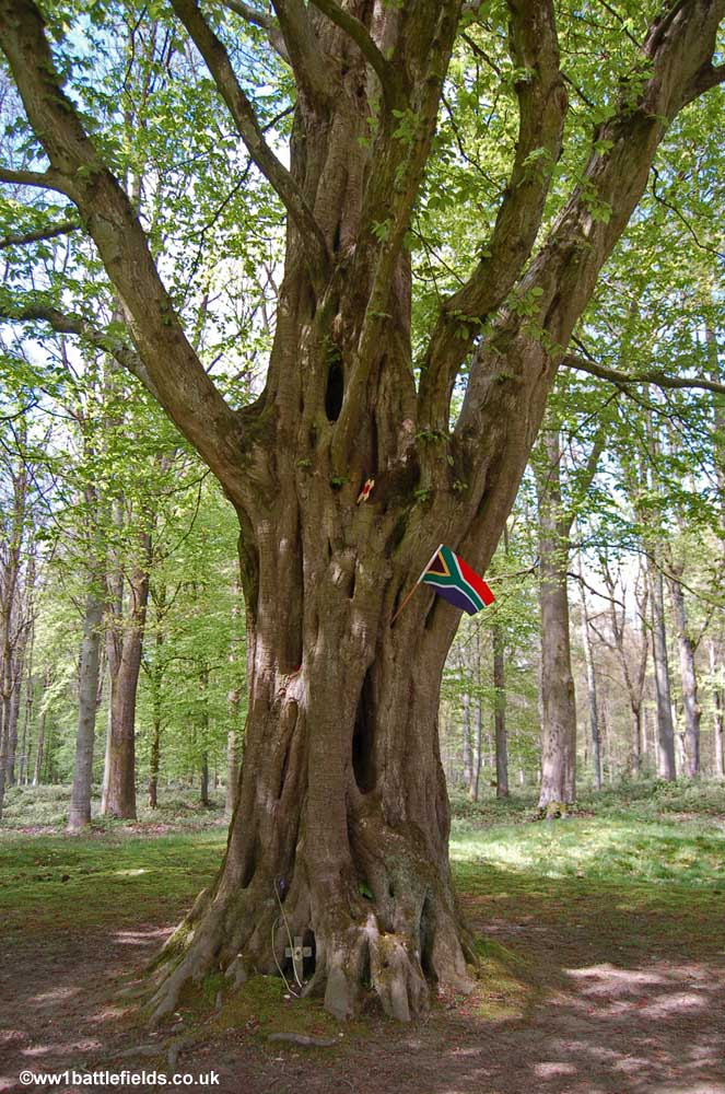 Wood From Trees ~ Delville wood the south african memorial world war one